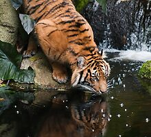 Drinking by Gerard Rotse