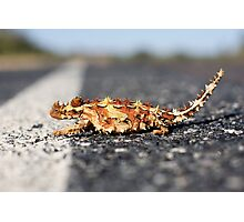 Sideways Thorny Devil Photographic Print