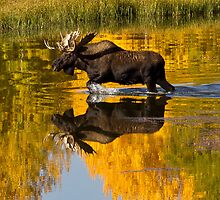 Just another morning at Oxbow, Wyoming USA by Jennifer Bailey