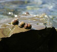 Three Snails by Aicani H.
