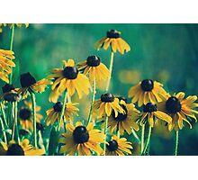 Emerald and Topaz Summer Botanical Photographic Print