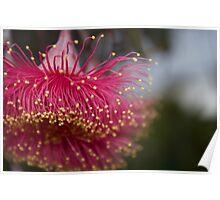 Gum Leaf Flower Poster