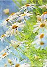 daisy delight by Teresa Pople