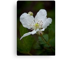 """Wild Blackberry Bloom"" Canvas Print"