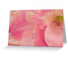 Many Pink Gladiola Petals  Greeting Card