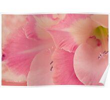 Many Pink Gladiola Petals  Poster