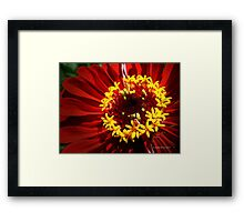 Nature's halo Framed Print