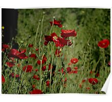 red flowerfield Poster