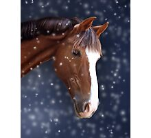 Chestnut Pony in the Snow Photographic Print