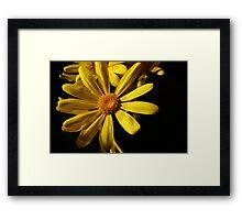 Daisy, Daisy ...... Framed Print