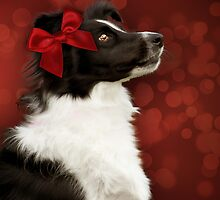 Collie on Bokeh with Big Red Bow by Ethiriel