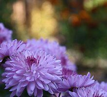 Mum's the Word - Autumn Purples by Cherie Balowski