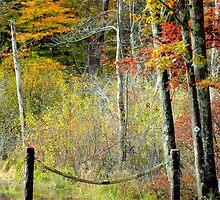 Bradley Palmer Park: Fall 2011 by john forrant