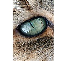 The Cat with the World in  Her Eyes Photographic Print