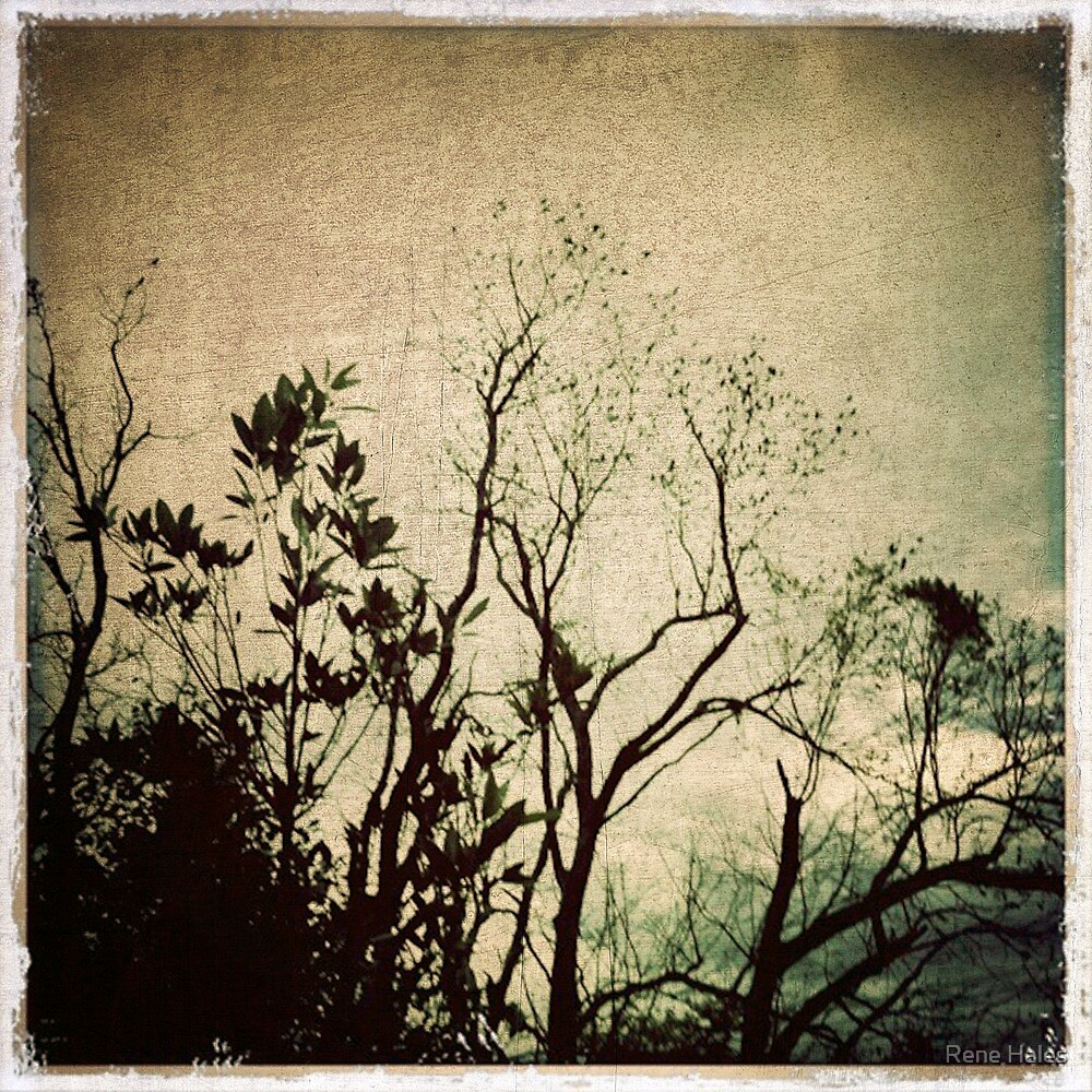 Backyard Birds by Rene Hales