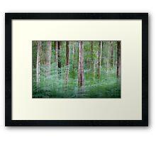 Woodland Impressions Framed Print