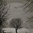 Tree alone by Jennifer P. Zduniak