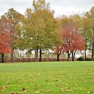Treeline with color by Jennifer P. Zduniak