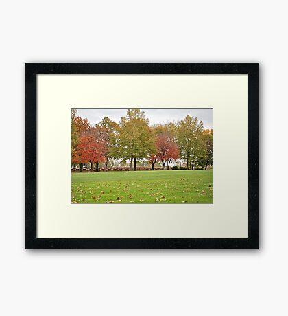 Treeline with color Framed Print
