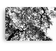 Autum in the Air Canvas Print