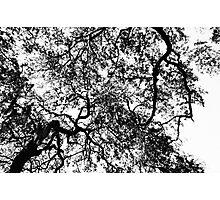 Autum in the Air Photographic Print