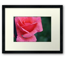 Sweet Rose Framed Print