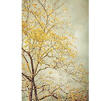 Leaves of Gold Glitter in Autumn Sunlight Photographic Print