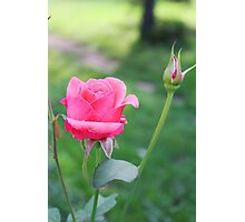 Rose and Bud Photographic Print