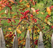Autumn Behind the Fence by karina5