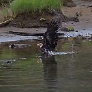 baby eagle taking a bath- Ketchikan Alaska by creativegenious