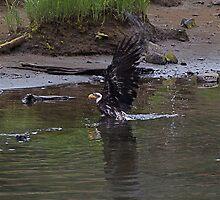 baby eagle taking a bath- Ketchikan Alaska by creativegenious