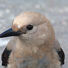 Curious bird by zumi