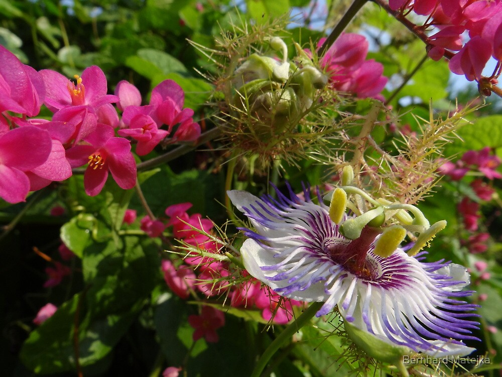 Colourful wild nature - wild blossoms and flowers in the tropics by Bernhard Matejka