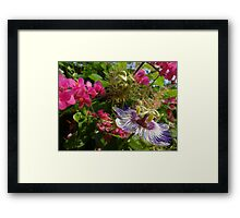 Colourful wild nature - wild blossoms and flowers in the tropics Framed Print