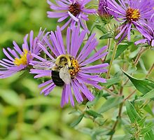 Busy as a Bee by Scott Mitchell