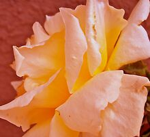 Coral Rose by Christine Chase Cooper