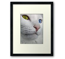 Do Cats Wonder About The Meaning of Life? Framed Print