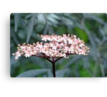 a flower with many buds Canvas Print