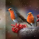 Christmas robins by cards4U