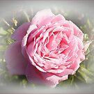 The Rose by rasnidreamer