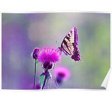 """Tiger swallowtail """"bokeh"""" Poster"""