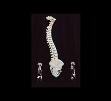 Spine Walk by doorfrontphotos