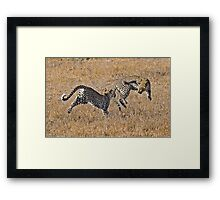 Young Female Leopards Playing Framed Print