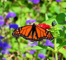 Monarch for the Day by Brian Gaynor