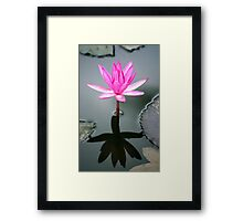 Tropical Diva - waterlilly flower Framed Print