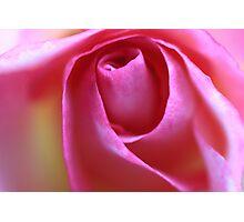 """Emerging Rose"" Photographic Print"