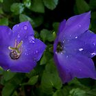 Purple Flowers after the storm by Geode
