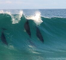 Dolphins waveplay by Kip Nunn