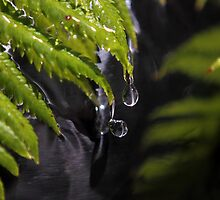 Water Fern by yolanda