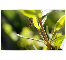 New Born Mantis - First Predators of Spring Poster